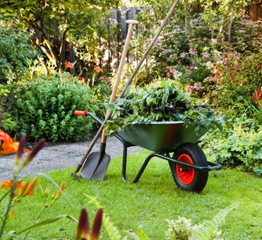 Late summer gardening