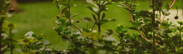 Garten-Zubehör